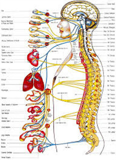 Functional Neurology by San Diego Health and Wellness
