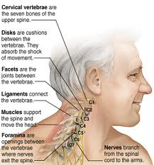 Vertebrae image - San Diego Chiropractic, Massage specialize in pain relief and treatment of neck, spine and nerves utilizing various techniques to achieve optimal results.